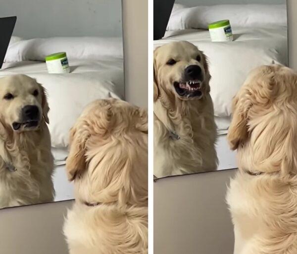 Câine în oglindă