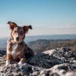 De ce au câinii ochii diferiți?