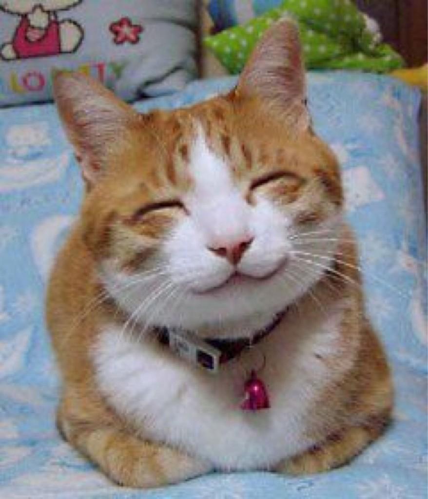 Pisică fericită